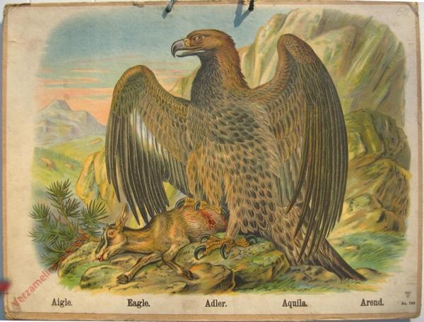 749 - Aigle, Eaglem Adler, Aquila, Arend